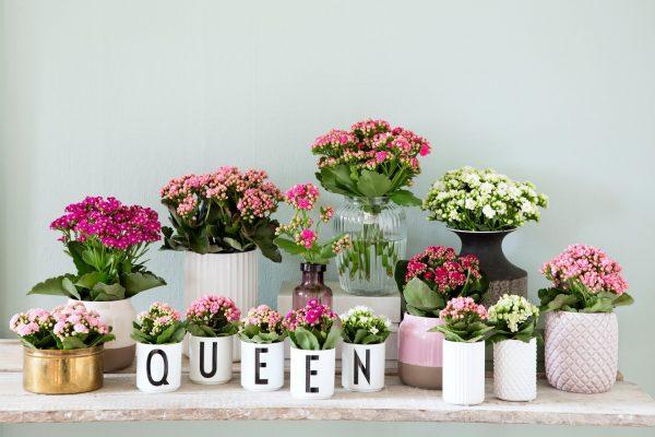 queen-flowers-izmir-2